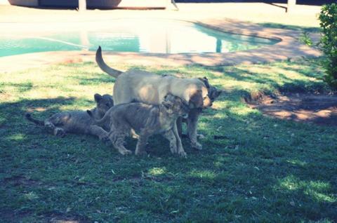Coco, den 10mnd gammle hunden til Yadie, med Chandler, Pheobe & Rachel.